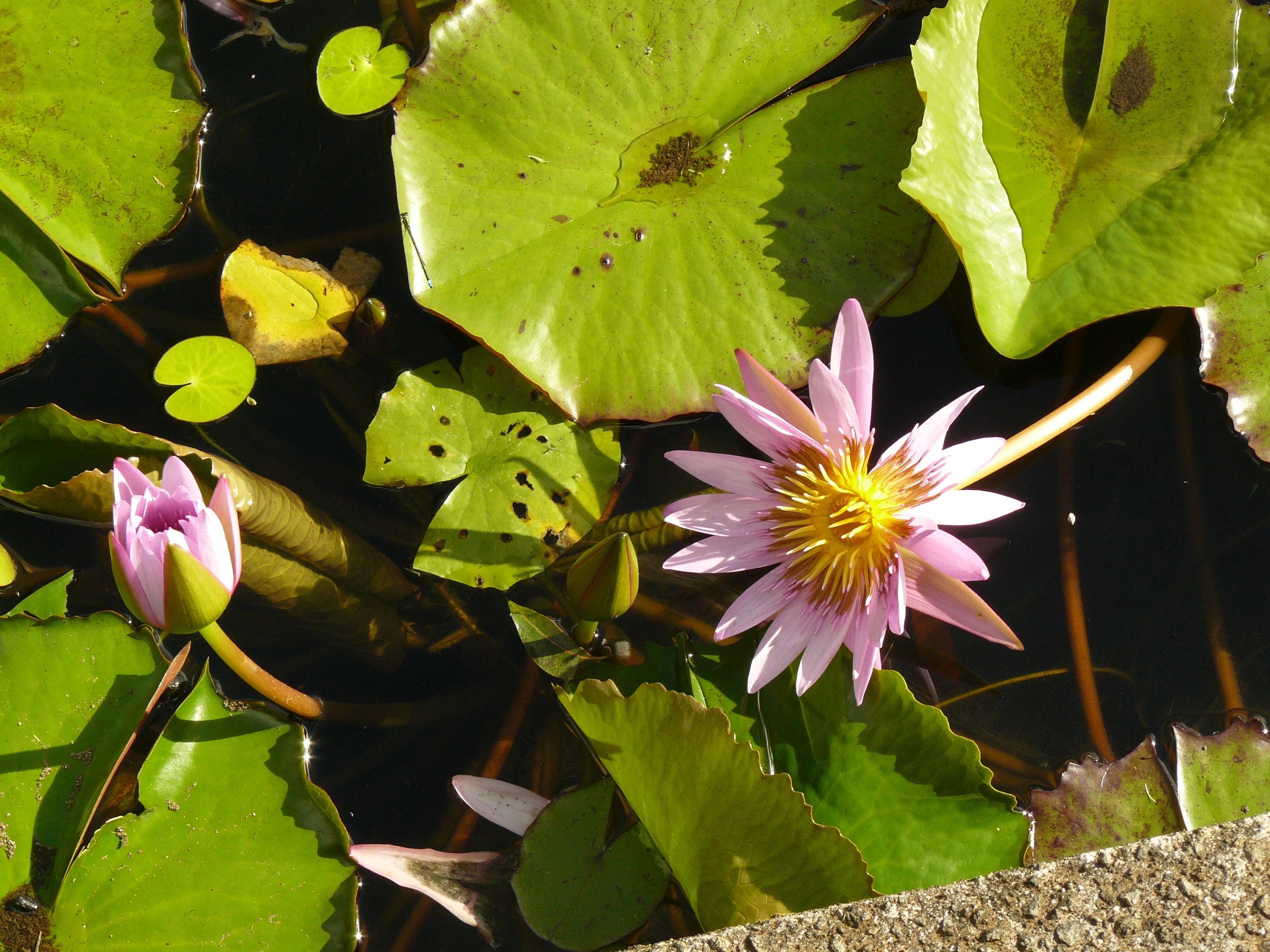 jardin-de-batala-36