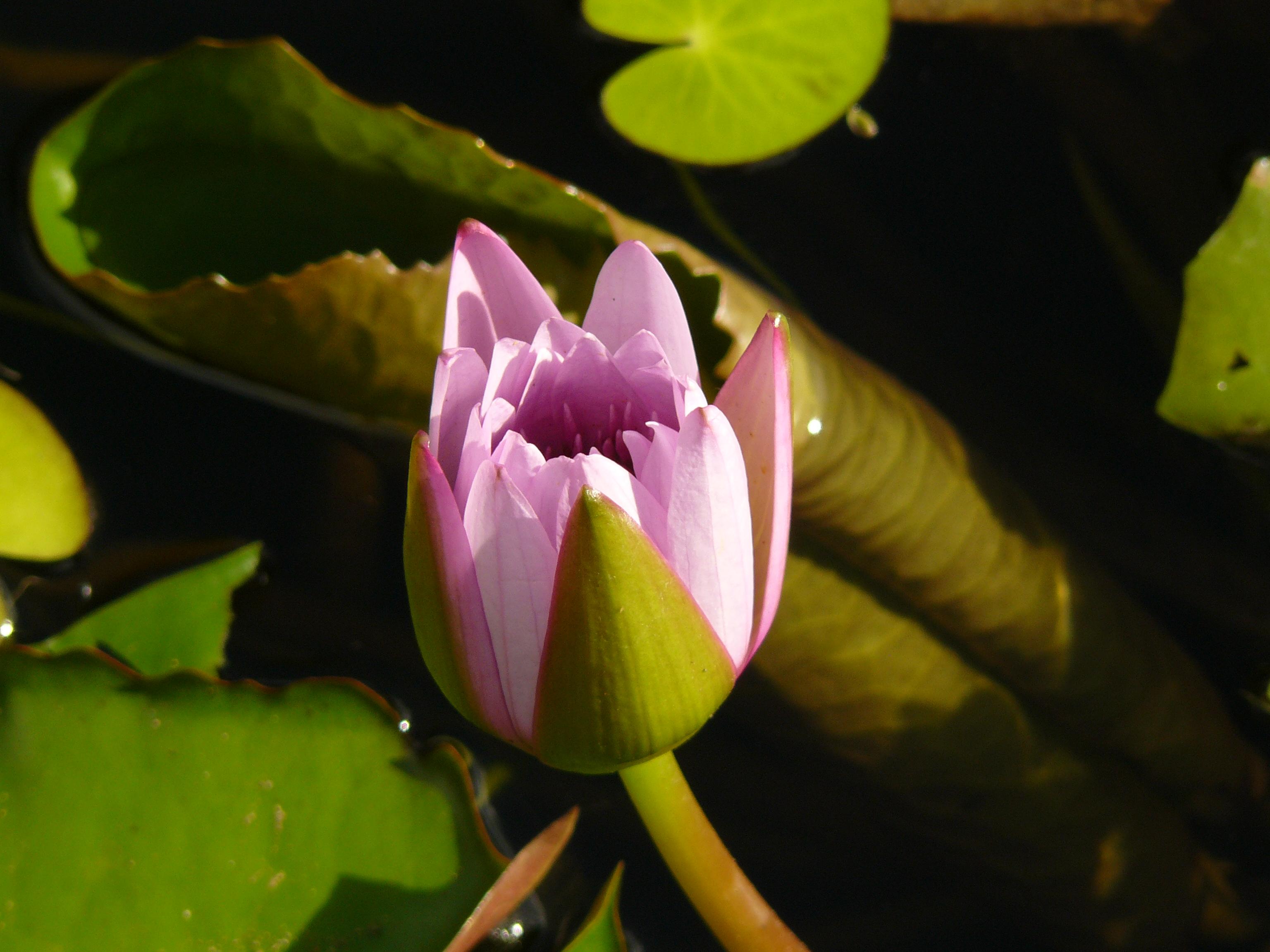 jardin-de-batala-38