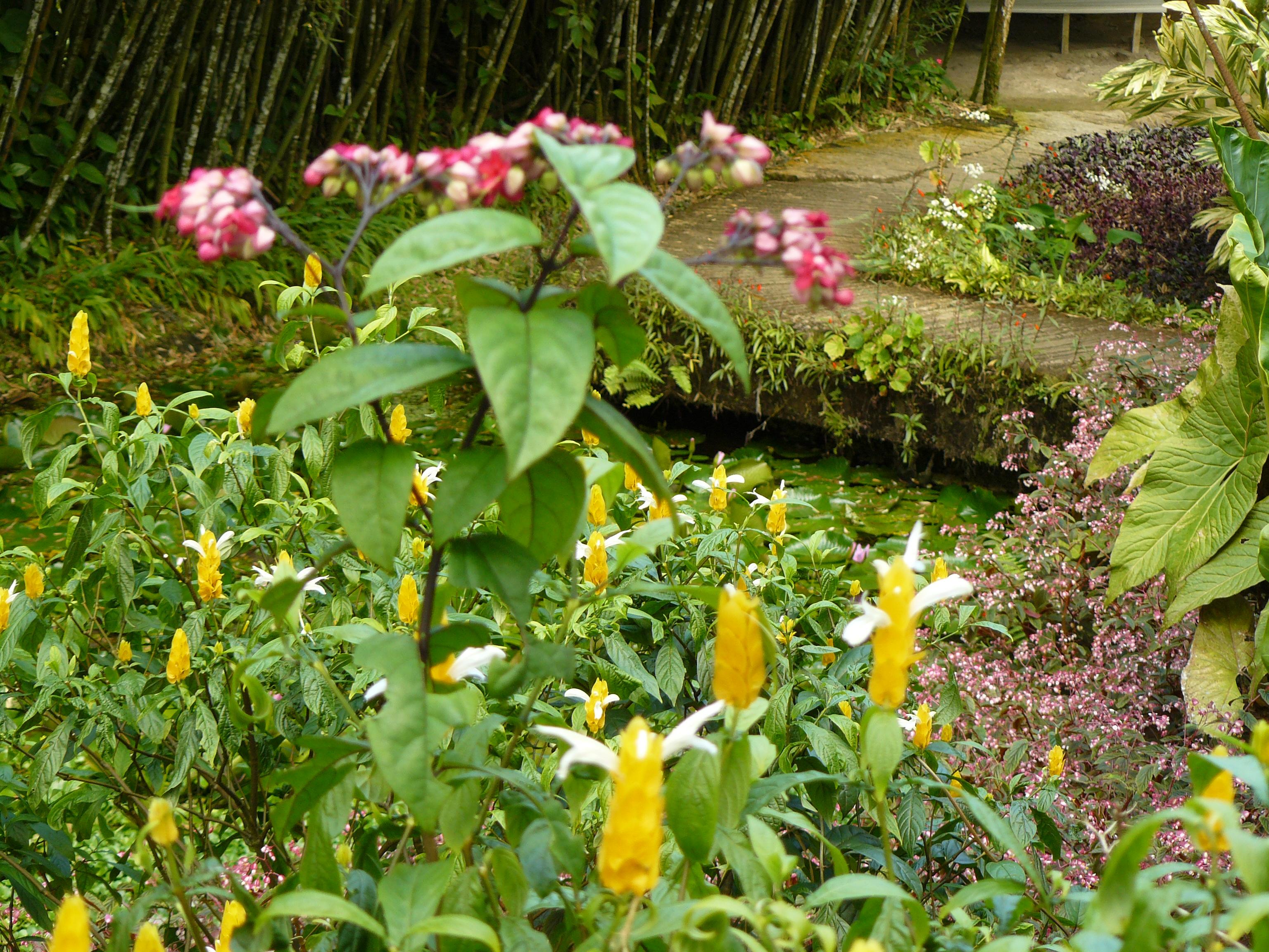 jardin-de-batala-56