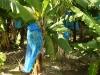 bananeraie-1