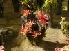 jardin-de-batala-10