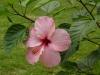 jardin-de-batala-15