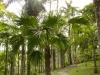 jardin-de-batala-20