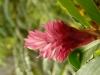 jardin-de-batala-24