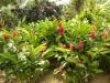 jardin-de-batala-27
