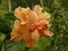 jardin-de-batala-3