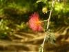jardin-de-batala-33