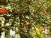 jardin-de-batala-34