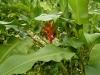 jardin-de-batala-49