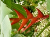 jardin-de-batala-50