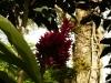 jardin-de-batala-51