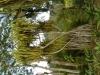 jardin-de-batala-55