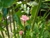jardin-de-batala-59