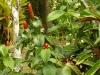 jardin-de-batala-6