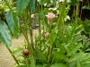 jardin-de-batala-63