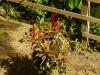 jardin-de-batala-8