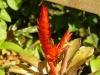 jardin-de-batala-9